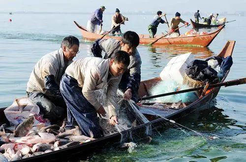 江川盐水鱼