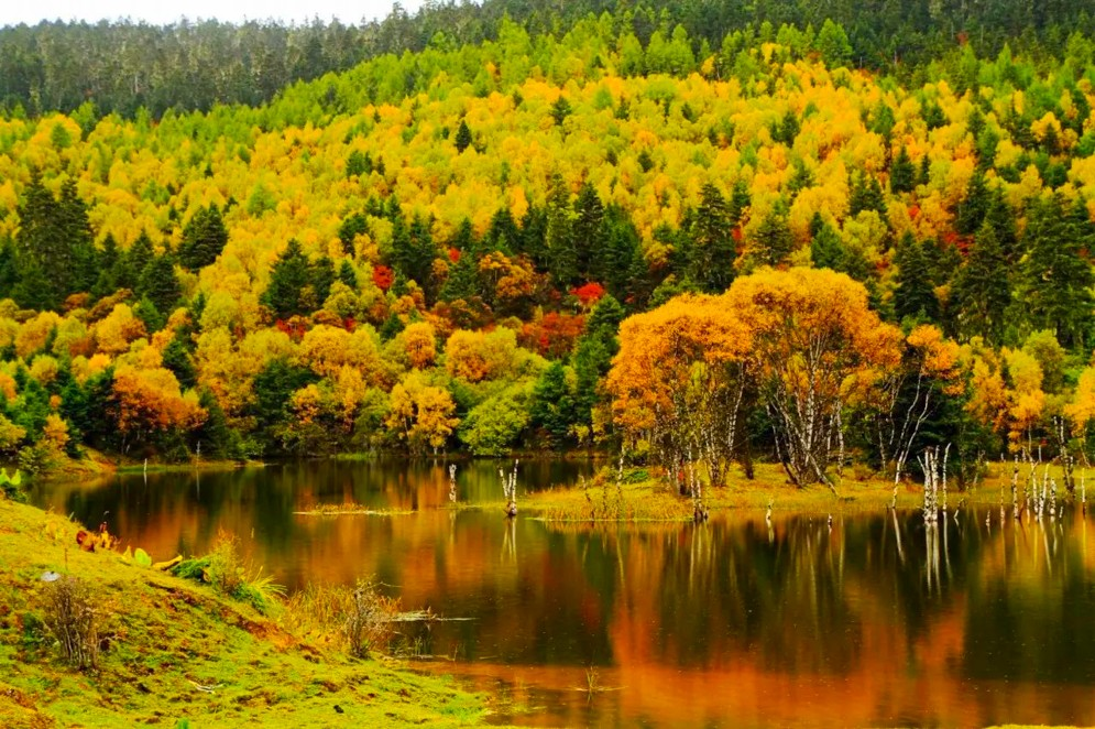 千山湖的树木