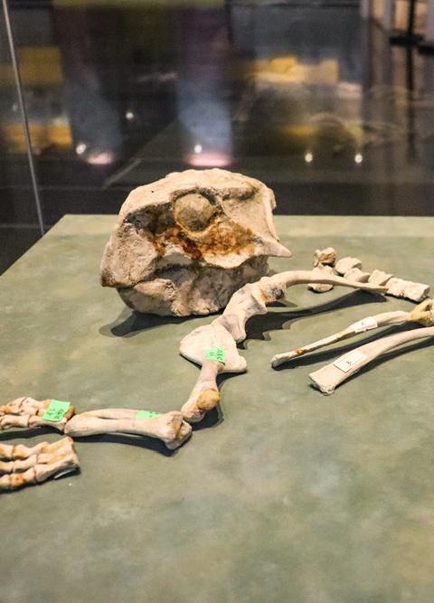 史前动物骨架