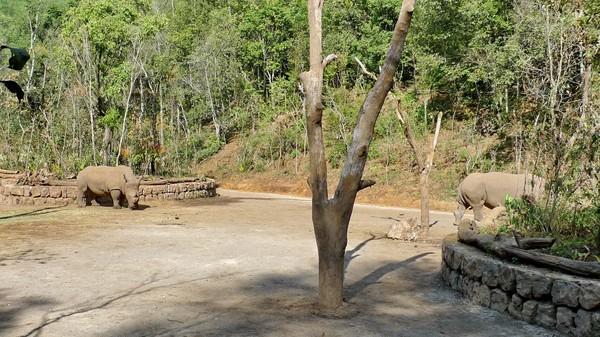 普洱国家公园犀牛坪